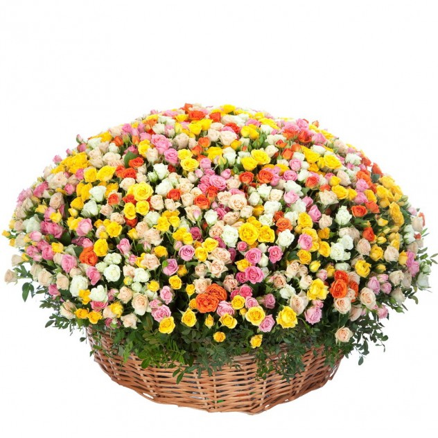Корзина из 301 кустовой розы
